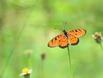 De Vlinder van Beautyful stock foto