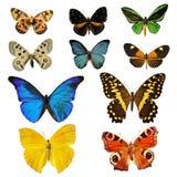 De vlinder van Colorfull Stock Afbeeldingen