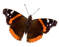De Vlinder van de admiraalvlinder Stock Afbeelding