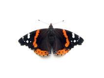 De Vlinder van de admiraalvlinder Stock Afbeeldingen