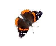 De vlinder van de admiraalvlinder (atalanta van Vanessa) Royalty-vrije Stock Foto