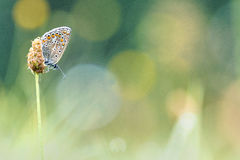 De Vlinder van de close-up op Bloem Stock Foto's