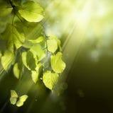 De vlinder van de kunst op de lentebladeren Royalty-vrije Stock Afbeelding