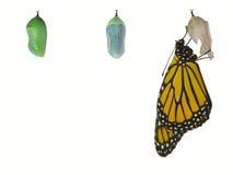De Vlinder van de monarch Stock Foto