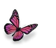 De Vlinder van de monarch die op Wit wordt geïsoleerde