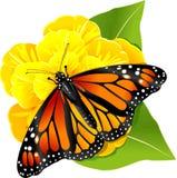 De vlinder van de monarch op de bloem Royalty-vrije Stock Fotografie