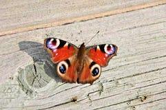 De vlinder van de pauw (Latijnse naam: Inachis io) Royalty-vrije Stock Fotografie