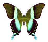 De vlinder van de schittering stock foto
