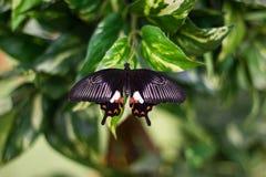 De vlinder van de schoonheid in Aard Royalty-vrije Stock Foto