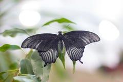 De vlinder van de schoonheid in Aard Stock Afbeeldingen