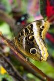 De vlinder van de schoonheid in aard Stock Foto