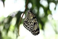 De Vlinder van de Vlieger van het document Stock Afbeelding