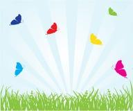 De vlinder van de zomer Royalty-vrije Stock Foto's