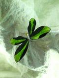 De vlinder van het kristal Stock Foto