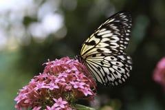 De Vlinder van het rijstpapier Royalty-vrije Stock Foto