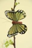 De vlinder van Immitation Royalty-vrije Stock Afbeeldingen