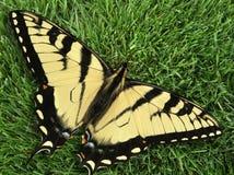 De Vlinder van Swallowtail op gras Royalty-vrije Stock Foto's