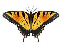 De Vlinder van Swallowtail van de Tijger van Pasen stock illustratie