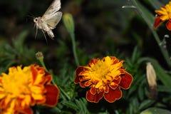 De vlinder verlaat de bloem stock foto