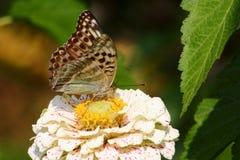 De vlinder. Wilde bloem. Stock Afbeeldingen