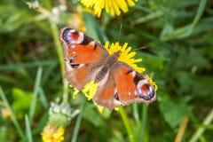 De vlinder zit op de bloem 2010 Royalty-vrije Stock Foto's