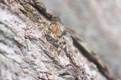 De vlinder zit op een boom Stock Afbeelding