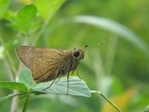 De vlinder zit op een groen blad royalty-vrije stock foto