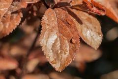 De vlinderbloem Stock Fotografie
