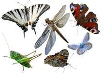 Vlinders, libel, een sprinkhaan, andere insecten Royalty-vrije Stock Foto