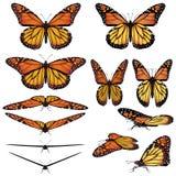 De vlinders van de monarch Royalty-vrije Stock Foto's