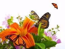 De Vlinders van de monarch Stock Afbeeldingen