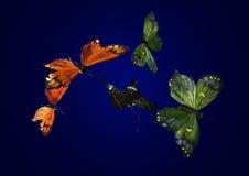 De vlinders van de zijde Stock Afbeelding