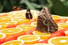 De vlinders zijn Vrij Royalty-vrije Stock Foto