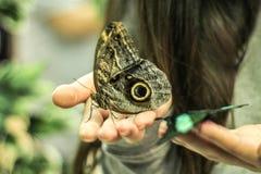 De vlinders zitten op de handen van een meisje Royalty-vrije Stock Foto