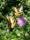 De vlinderzomer Stock Afbeeldingen