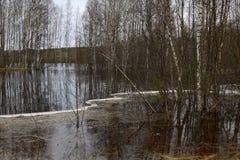 De vloed van de lente Stock Foto's