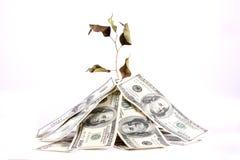 De vloek van Geld Stock Foto