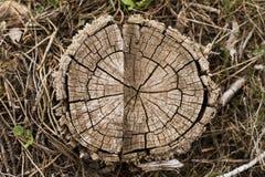 De vloer van de boomstomp Royalty-vrije Stock Afbeeldingen
