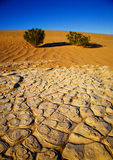 De Vloer van de woestijn stock afbeelding