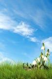 De vlokken van de de lentesneeuw Stock Foto