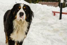 De Vlokken van de sneeuw Royalty-vrije Stock Fotografie