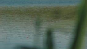 De vlotter bobber in het meer, verschijnt dan met de gevangen vissen stock footage
