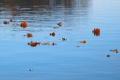 De vlotter van de herfstbladeren op water Meer of rivier met stil water in het de herfstseizoen stock fotografie