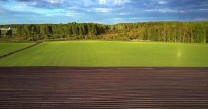 De vlucht harrowed hierboven gebiedsrijen en groen land aan bos stock footage