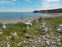 De vlucht van de albatros royalty-vrije stock foto's