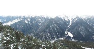 De vlucht van de hommel over de berghelling die met naaldbos wordt overwoekerd stock footage