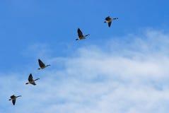 De Vlucht van de lente Royalty-vrije Stock Afbeelding