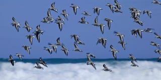 De Vlucht van de watersnip Stock Afbeelding