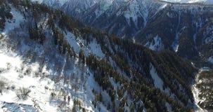 De vlucht van een hommel een dag onder bergen met naaldbos worden behandeld dat stock videobeelden