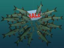 De vlucht van vissen bekijkt een haak Stock Afbeeldingen